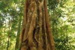 fig-tree-tablelands_1.jpg
