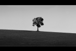 Lone-tree-benelongrd_Panorama1