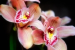 orchid_Panorama2a
