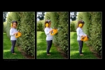 taressa-hedge-trimming-triptych