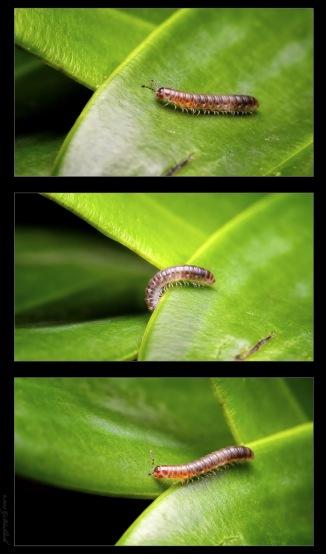 millipede-triptych.jpgimgmax2600