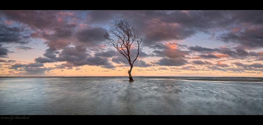 Tree - (c) 2014 Gerard Blacklock