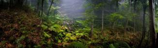 tropical-bush_Panorama1.jpgimgmax2000